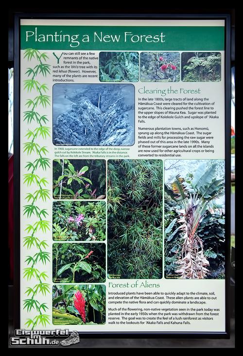 EISWUERFELIMSCHUH - Hawaii Big Island AKAKA Waterfalls State Park (11)