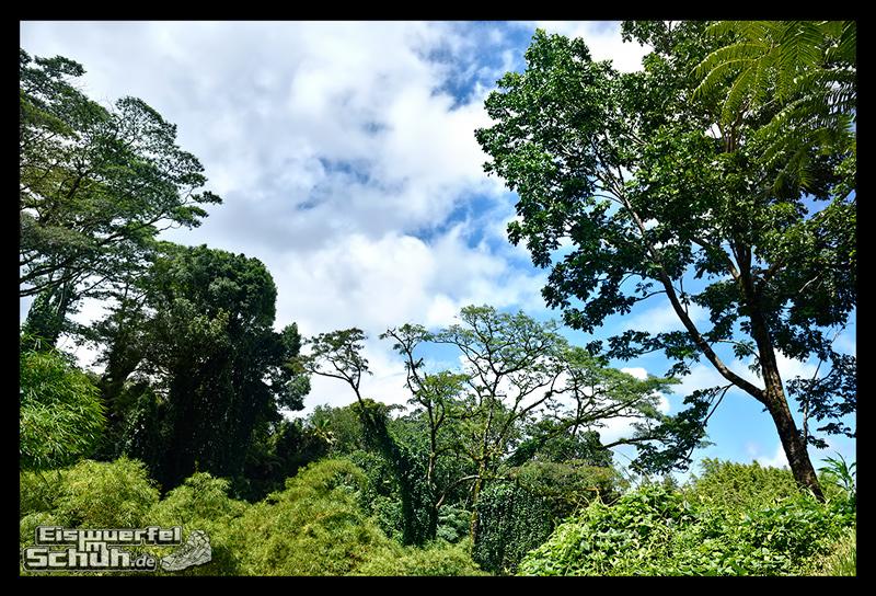 EISWUERFELIMSCHUH - Hawaii Big Island AKAKA Waterfalls State Park (21)