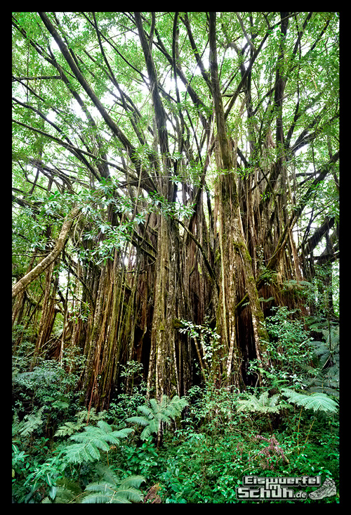 EISWUERFELIMSCHUH - Hawaii Big Island AKAKA Waterfalls State Park (97)